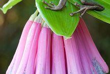 Amphibians / Amphibians
