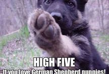 Cute and Funny / GSD MEME's