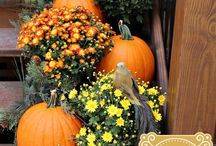 {Decor} Outdoor Fall Decor / by Paddy O' Furniture