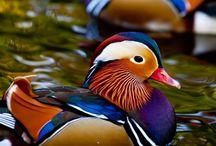 animaux colorés