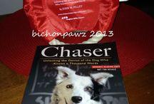 BlogPaws / Chaser!