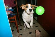 Beagle játék