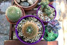 Plantitas para Decorar • / Pequeñas plantas que transforman los espacios aportando a ellos diseño, estilo, un aire natural y fresco. Ideas y estilos para cada rincón. #Deco #Plantas