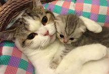 Kitties & puppies