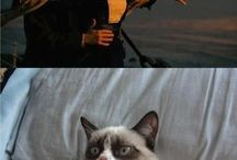 I love Grumpy Cat / by Shannon Holland
