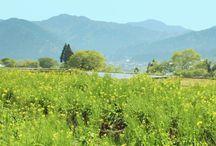 Mountain|haconiwa COLLECTION VOL.01 / LINE DECOで公開しているhaconiwaのコレクション。