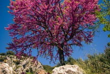 Inspiring Trees in Nature / Beautiful nature photography from around the world