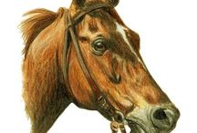 Race Horses In Art 04A- Notable 20th Century American Raced Colts And Geldings / Horses born up to 1969
