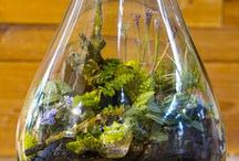 Handcrafted Terraniums