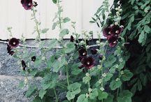 Trädgård -18
