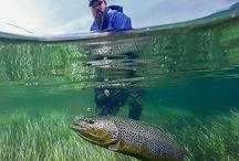 Underwater Fish Shots