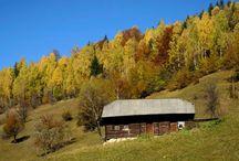 homes and barns