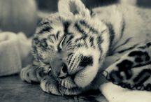Soooo Cute!!  / by Deanna Megan