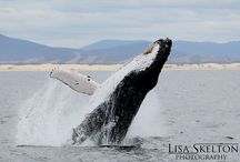 Port Stephens / Love the Port Stephens Wildlife!