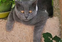 Mon chat Mishka