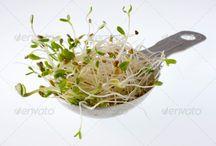 alfalfa, aluminum