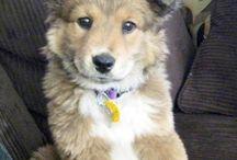 Huskies!!!❤❤❤