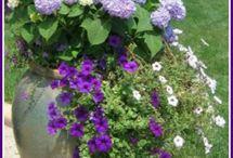 fleurs extérieur