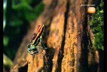 pijlgif kikkers en vlinders