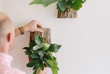 pflanzen auf hold aufziehen in der wohnung