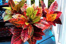 Verde que te ❤ verde  / Plantas y jardineria