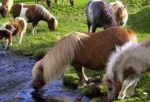 Horses / by Samantha Alfred