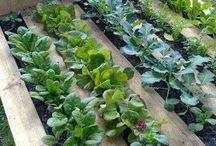 Jardinage palette