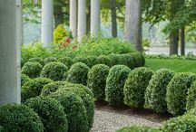 """Just Boxwoods / """"A boxwood's about the most satisfactory bush you could possibly plant—it will grow anywhere, transplant with ease, and you only need to clip about twice a season.""""  — Elizabeth Locke via One Kings Lane"""