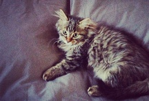 My Cat! / All about my cat Monkey