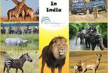 India Wildlife Package
