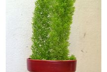 Maceta-Planta