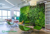green wall / interior