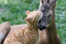 odd animal friends