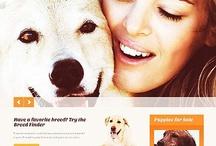 Pet Shop/Veteriner