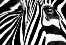 African artwork shortlist