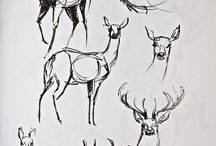 animals draw