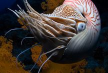 Living Seas / underwater pictures of sea life
