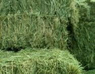 HAY! / Everything Hay!