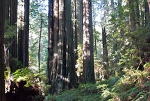 Humboldt County / Photos from Behind the Redwood Curtain