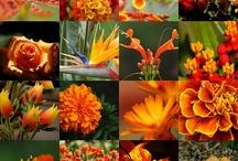 Colour: Orange!  / Tangerine, rust, apricot, peach, coral, salmon, sienna, ochre…
