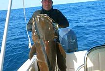 Awesome fish / Great fish speared