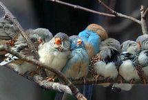 Birds / by Louve Bleue