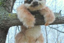 Cute widdle babby annnimalls
