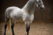 Mooie paarden/ Pretty horses