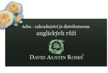 Banner-anglické-růže