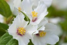 flowers flowers flowers / flowers in vases & gardens