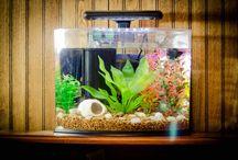 Amazing Fish Tank Decoration