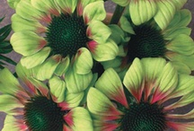 How does your garden grow? / Flowers, garden, decor, tips, etc / by Jenn Hilyer
