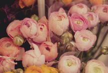 fleurs / by ashley martin williams