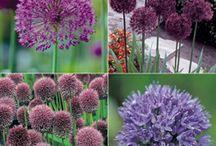 Garden / Plant Ideas